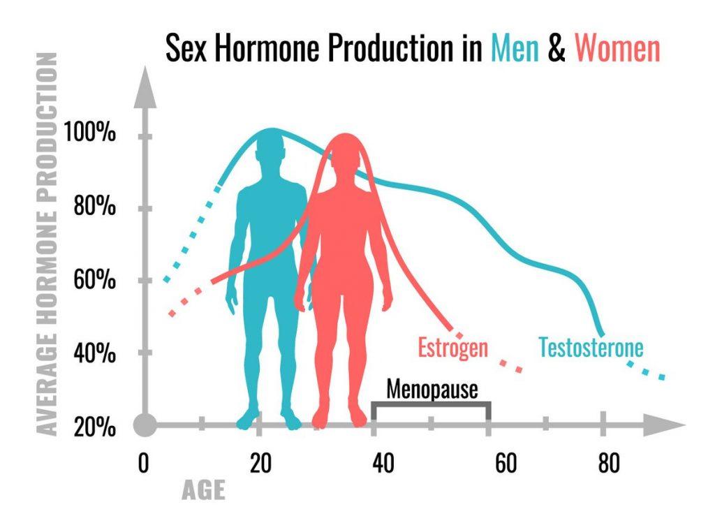 testosterone estrogen production male female
