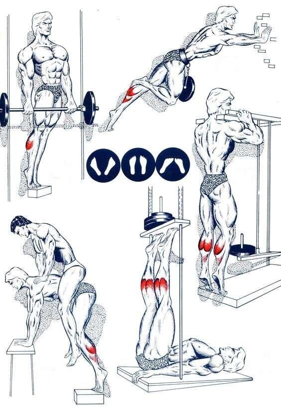 calves training tips and principles