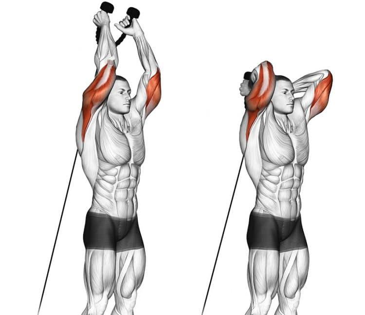 elastic band triceps extension rehabilitation exercise